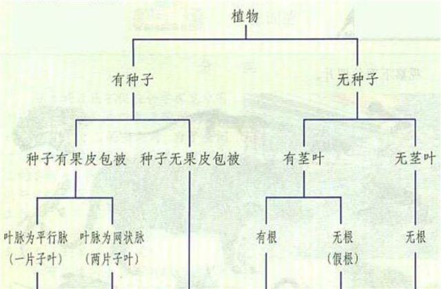 12张知识结构图,帮你扫清初中生物全部知识点,好简单!