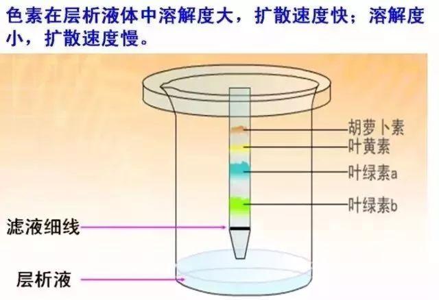 高中生物16个必考实验原理全解析