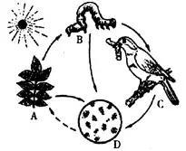 生物考试识图题全汇总