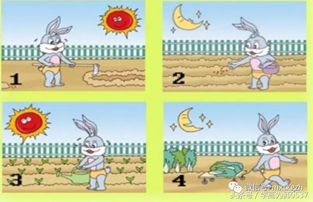 一年级看图写话作文:小白兔种菜