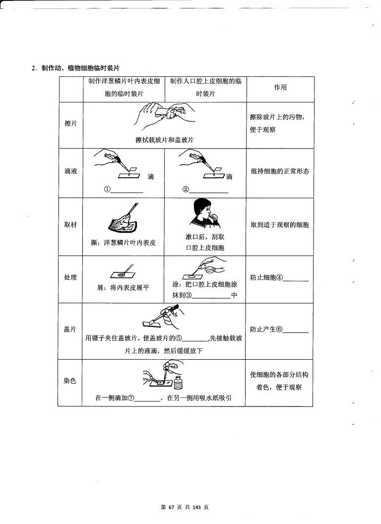 初中生物重点随堂笔记总结-填图速记